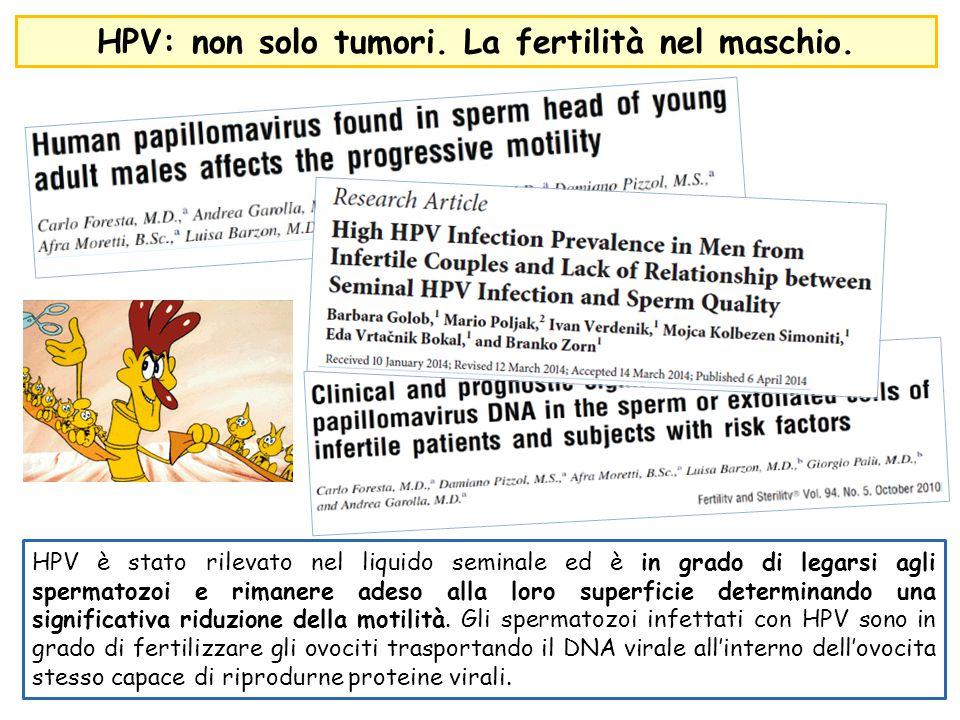 HPV: non solo tumori. La fertilità nel maschio.