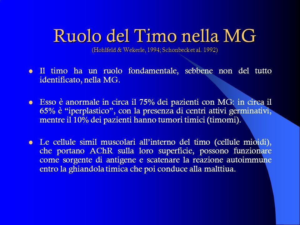 Ruolo del Timo nella MG (Hohlfeld & Wekerle, 1994; Schonbeck et al