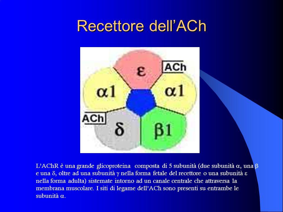 Recettore dell'ACh