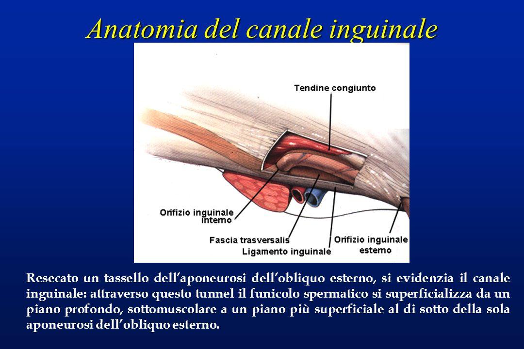 Anatomia del canale inguinale