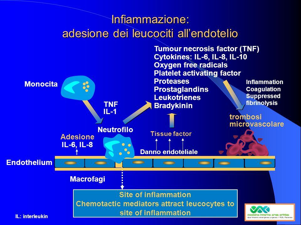 Infiammazione: adesione dei leucociti all'endotelio