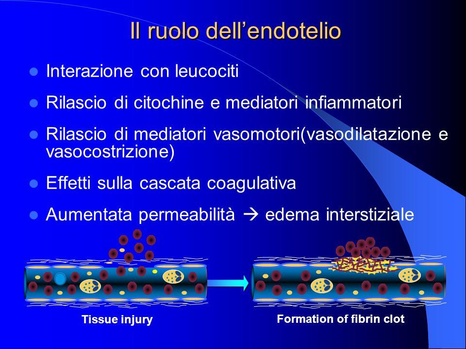 Il ruolo dell'endotelio
