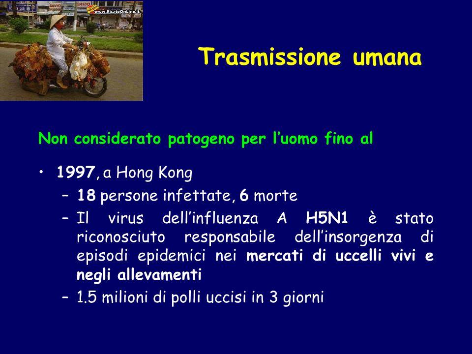 Trasmissione umana Non considerato patogeno per l'uomo fino al