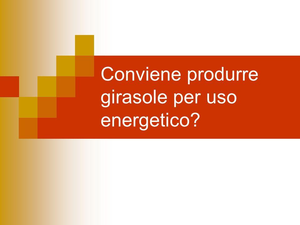 Conviene produrre girasole per uso energetico