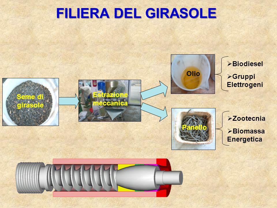 FILIERA DEL GIRASOLE Biodiesel Gruppi Elettrogeni Olio