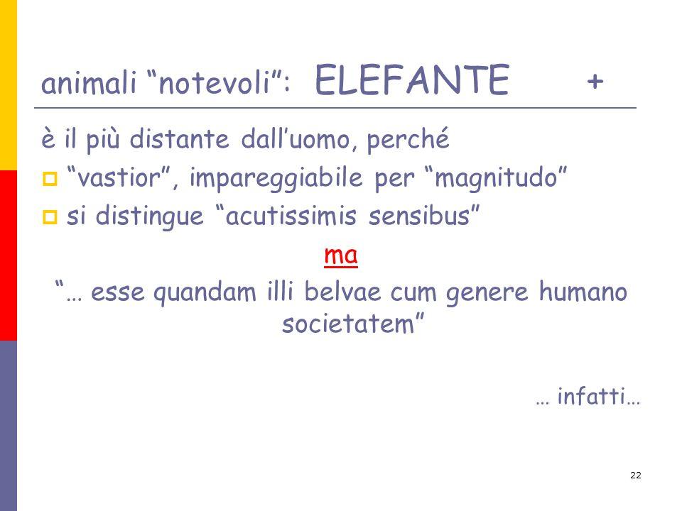 animali notevoli : ELEFANTE +