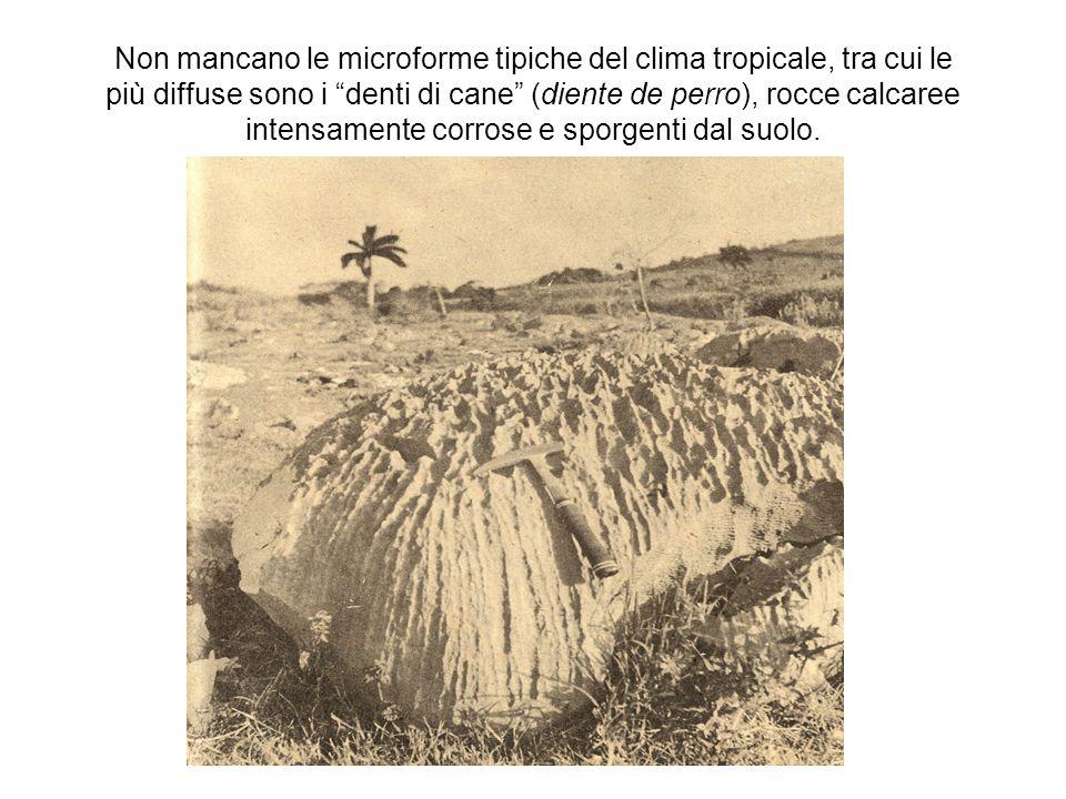 Non mancano le microforme tipiche del clima tropicale, tra cui le più diffuse sono i denti di cane (diente de perro), rocce calcaree intensamente corrose e sporgenti dal suolo.