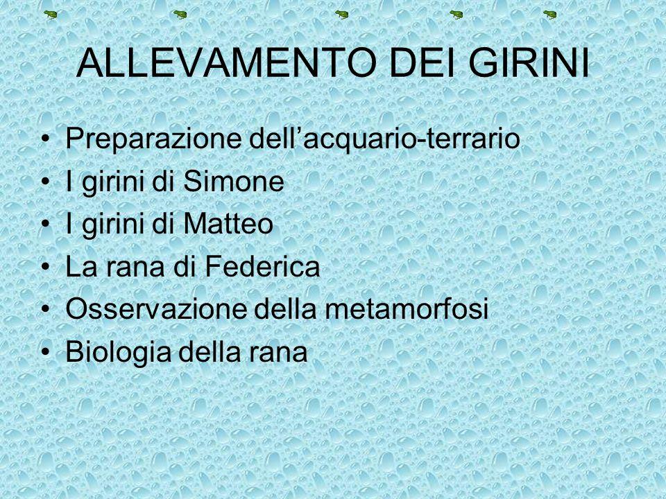 ALLEVAMENTO DEI GIRINI