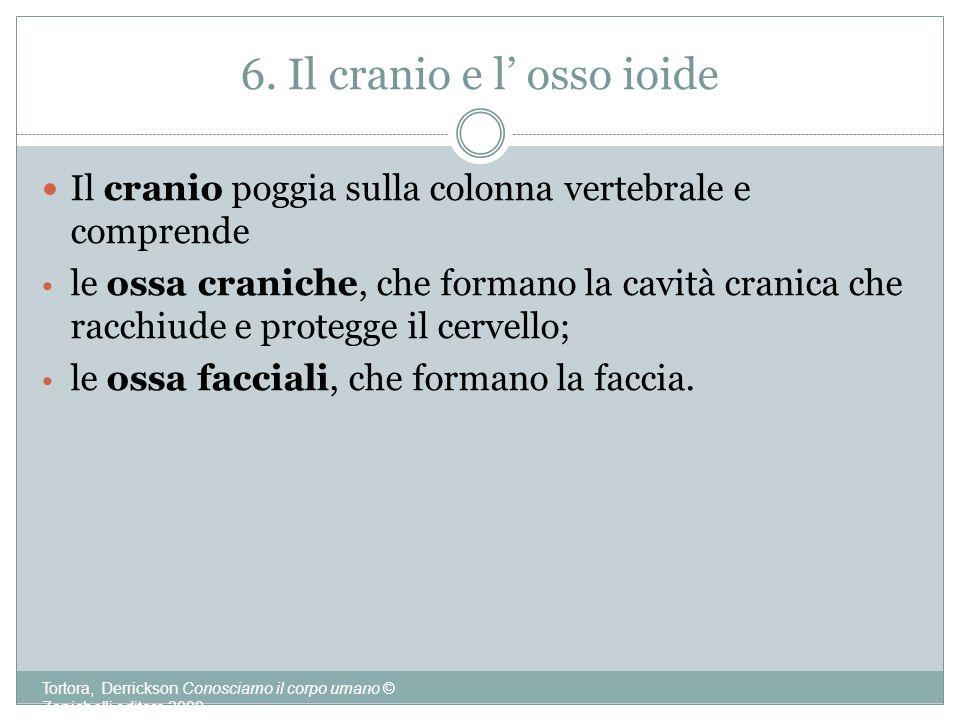 6. Il cranio e l' osso ioide