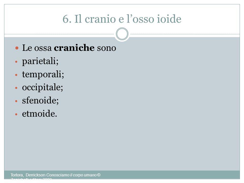 6. Il cranio e l'osso ioide