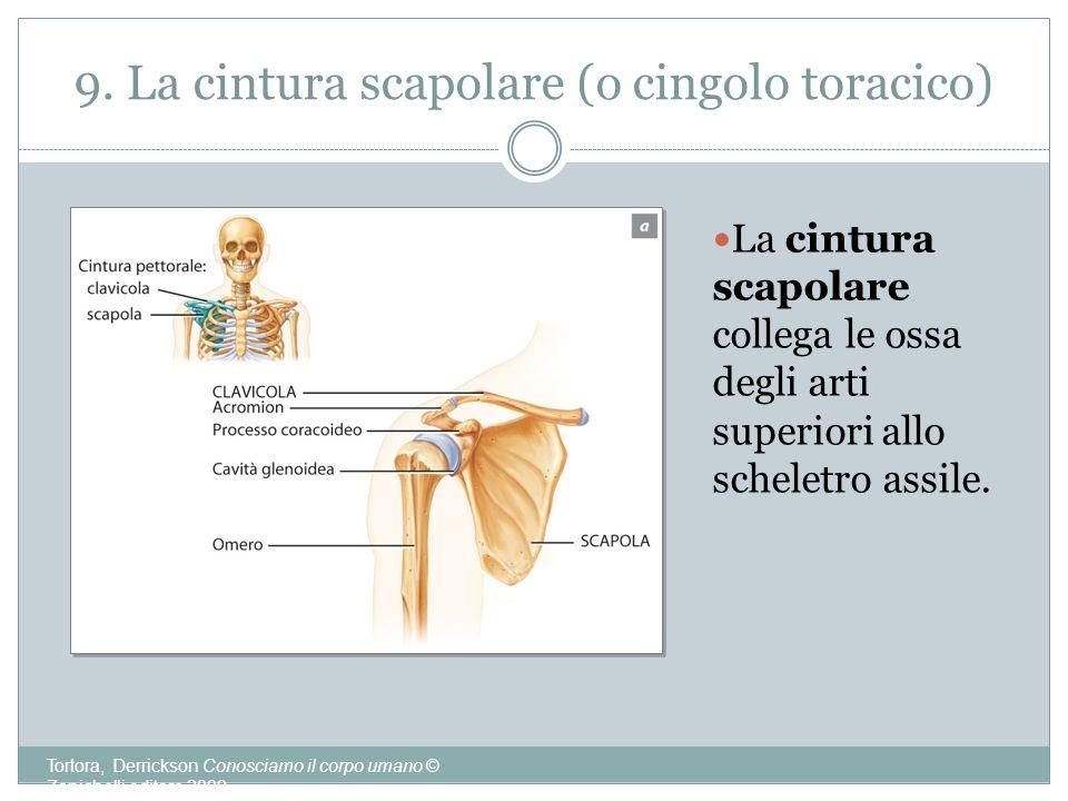 9. La cintura scapolare (o cingolo toracico)