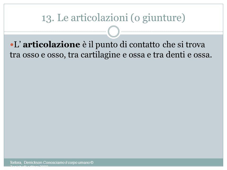 13. Le articolazioni (o giunture)
