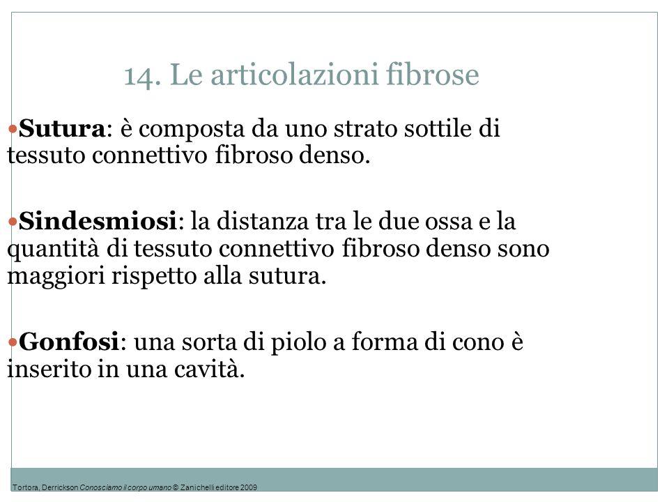 14. Le articolazioni fibrose