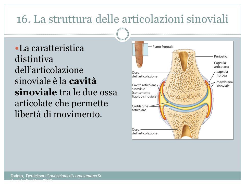 16. La struttura delle articolazioni sinoviali