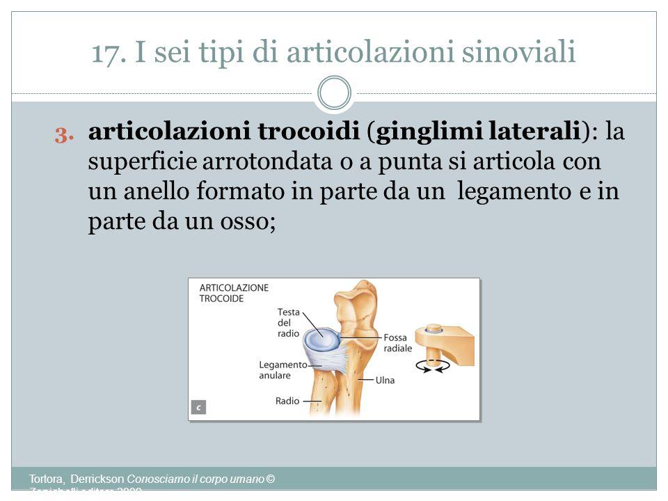 17. I sei tipi di articolazioni sinoviali