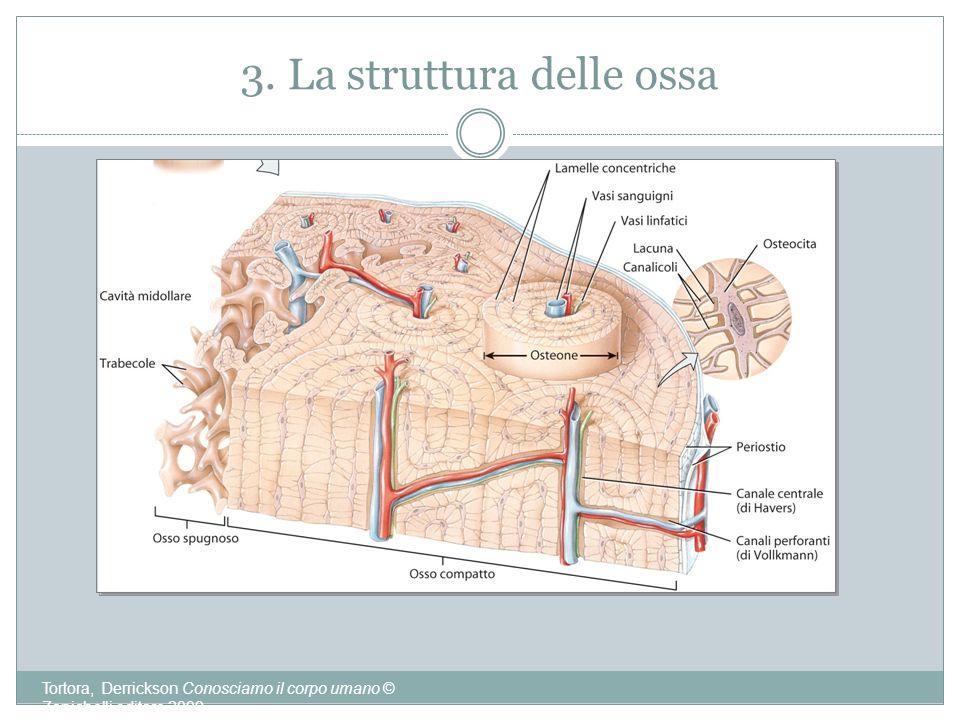 3. La struttura delle ossa