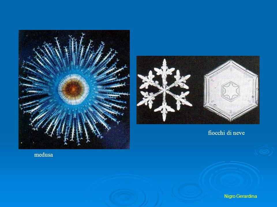 fiocchi di neve medusa