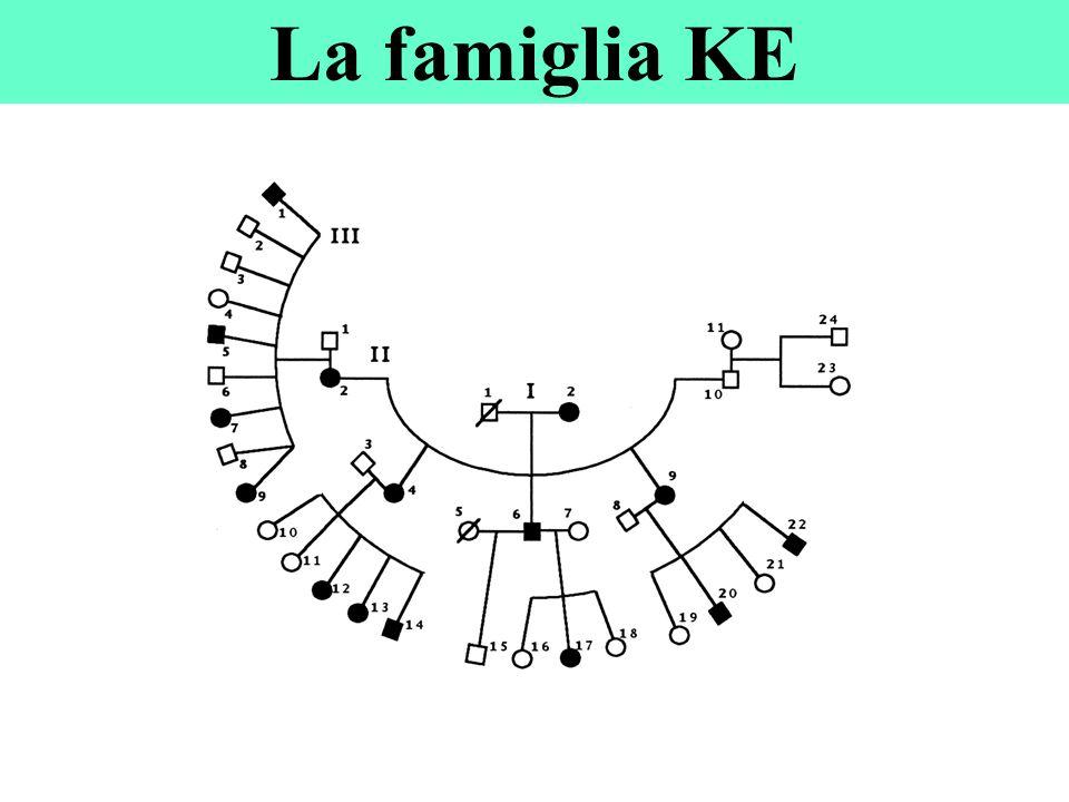 La famiglia KE