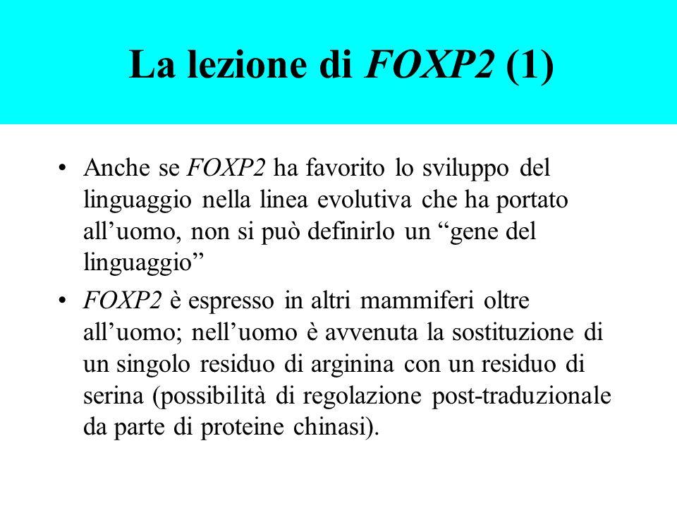 La lezione di FOXP2 (1)