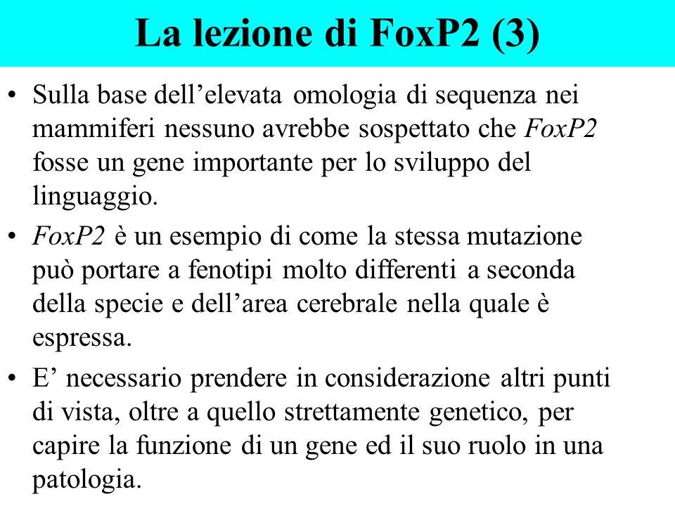 La lezione di FoxP2 (3)