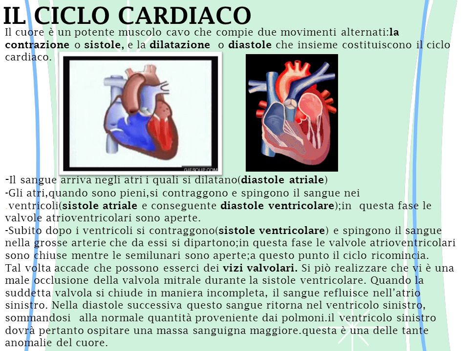 IL CICLO CARDIACO -Il sangue arriva negli atri i quali si dilatano(diastole atriale)