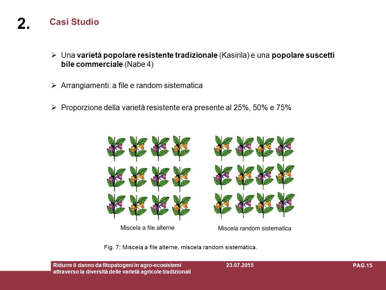 2. Casi Studio. Una varietà popolare resistente tradizionale (Kasirila) e una popolare suscettibile commerciale (Nabe 4)