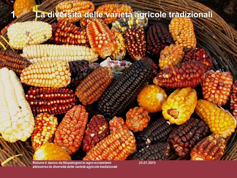 1. La diversità delle varietà agricole tradizionali