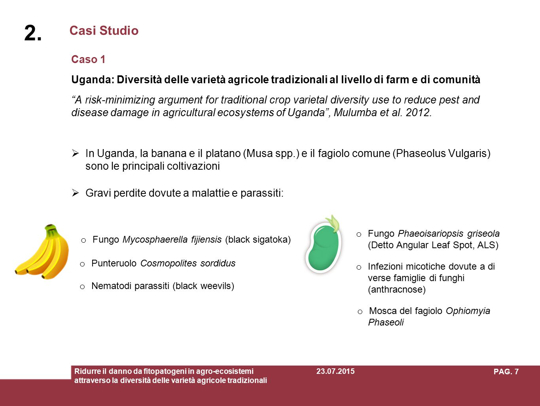 Fungo Mycosphaerella fijiensis (black sigatoka)