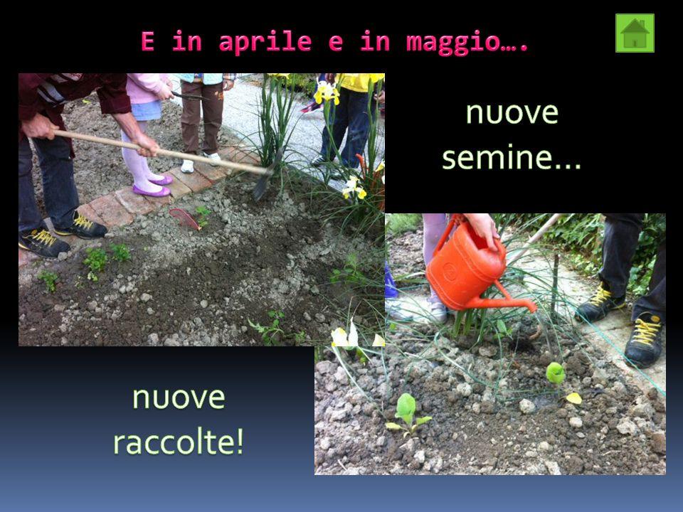 E in aprile e in maggio…. nuove semine… nuove raccolte!