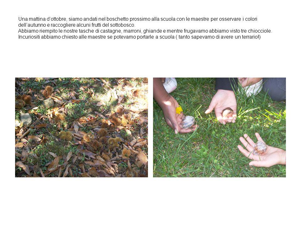 Una mattina d'ottobre, siamo andati nel boschetto prossimo alla scuola con le maestre per osservare i colori dell'autunno e raccogliere alcuni frutti del sottobosco.