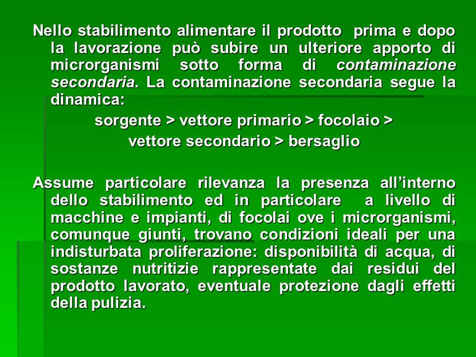 sorgente > vettore primario > focolaio >