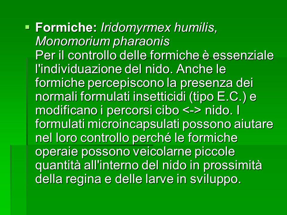 Formiche: Iridomyrmex humilis, Monomorium pharaonis Per il controllo delle formiche è essenziale l individuazione del nido.