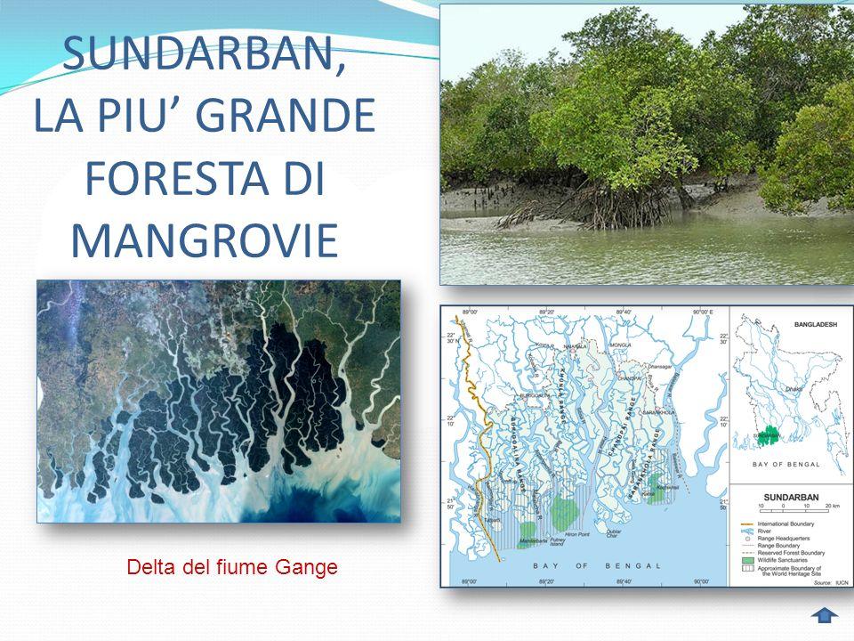 SUNDARBAN, LA PIU' GRANDE FORESTA DI MANGROVIE