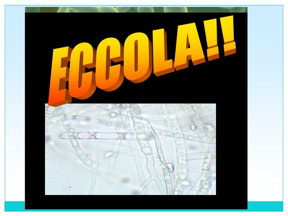ECCOLA!!