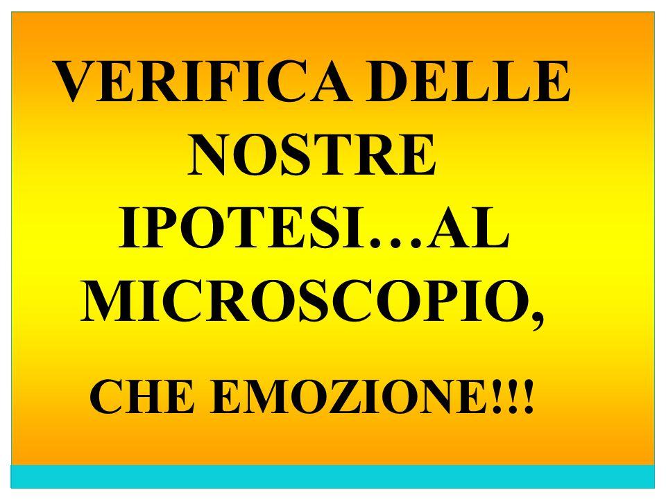 VERIFICA DELLE NOSTRE IPOTESI…AL MICROSCOPIO,