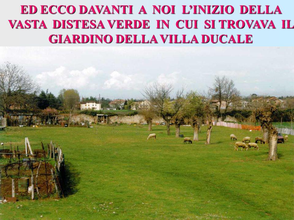 ED ECCO DAVANTI A NOI L'INIZIO DELLA VASTA DISTESA VERDE IN CUI SI TROVAVA IL GIARDINO DELLA VILLA DUCALE