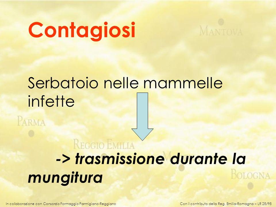 In collaborazione con Consorzio Formaggio Parmigiano-Reggiano