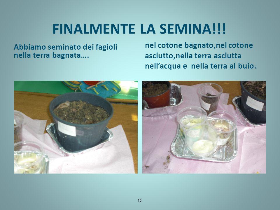 FINALMENTE LA SEMINA!!! Abbiamo seminato dei fagioli nella terra bagnata….
