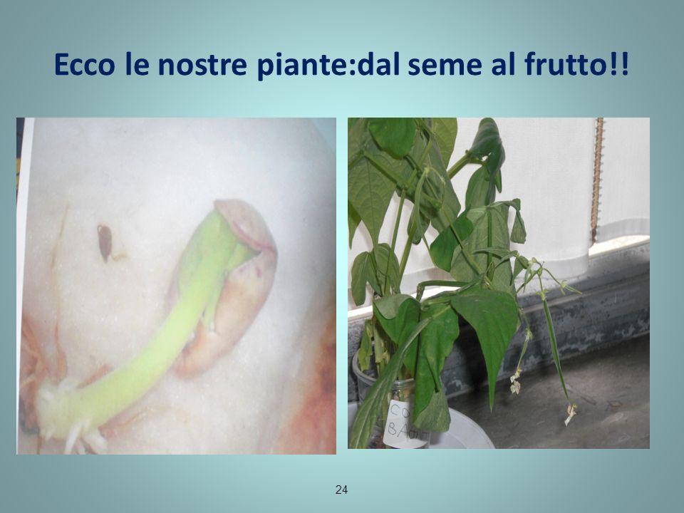 Ecco le nostre piante:dal seme al frutto!!
