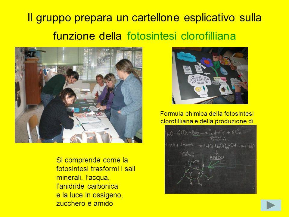 Il gruppo prepara un cartellone esplicativo sulla funzione della fotosintesi clorofilliana
