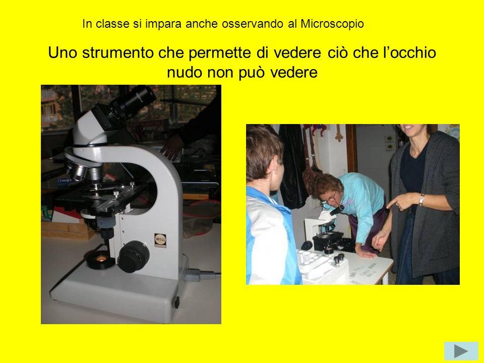 In classe si impara anche osservando al Microscopio