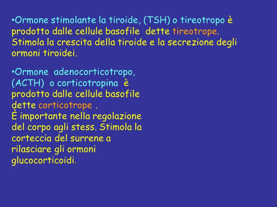 Ormone stimolante la tiroide, (TSH) o tireotropo è prodotto dalle cellule basofile dette tireotrope.