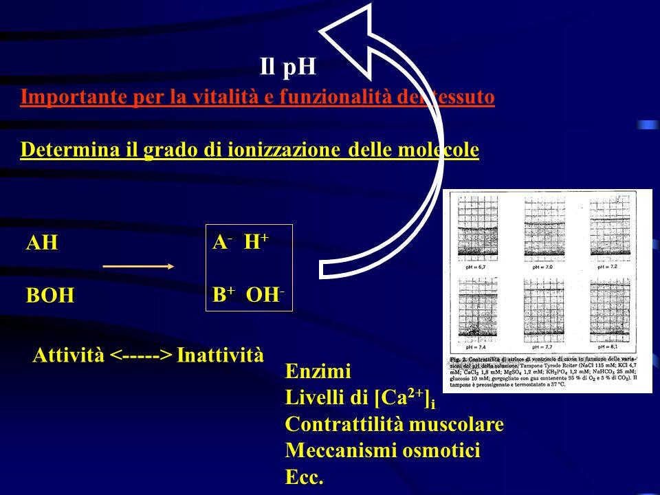 Il pH Importante per la vitalità e funzionalità del tessuto
