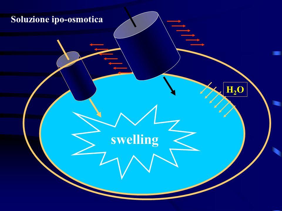 swelling Soluzione ipo-osmotica H2O