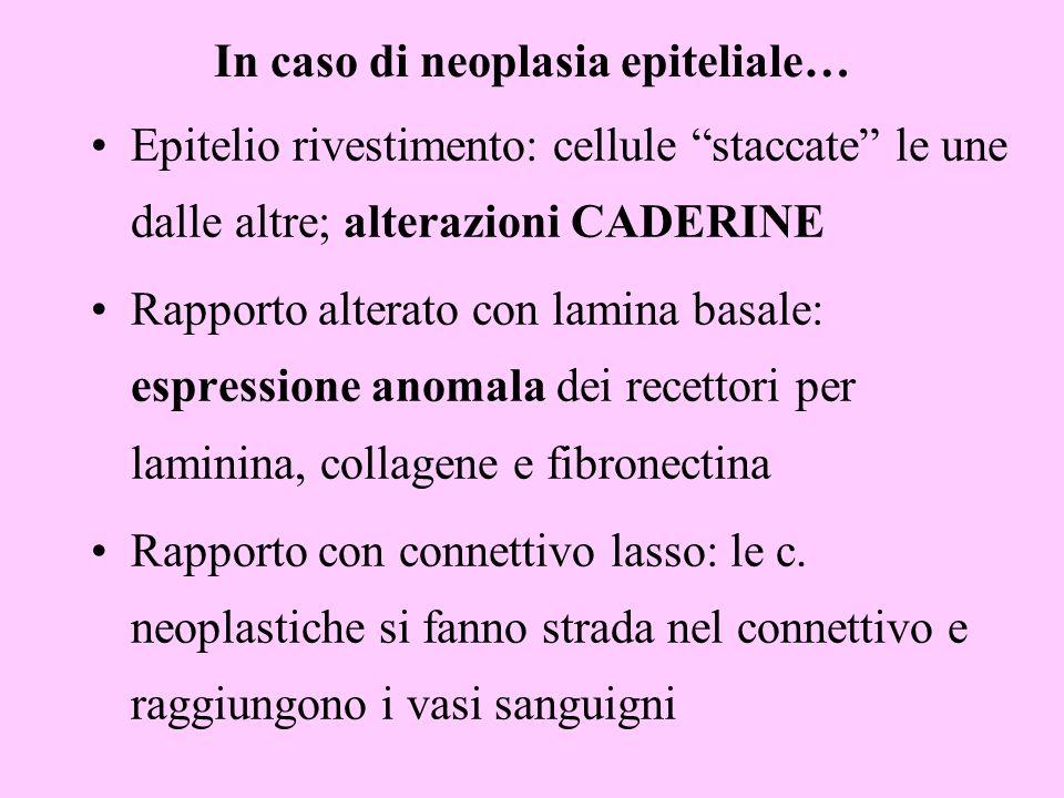 In caso di neoplasia epiteliale…
