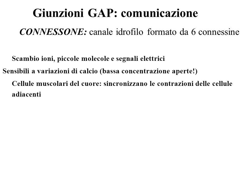 Giunzioni GAP: comunicazione