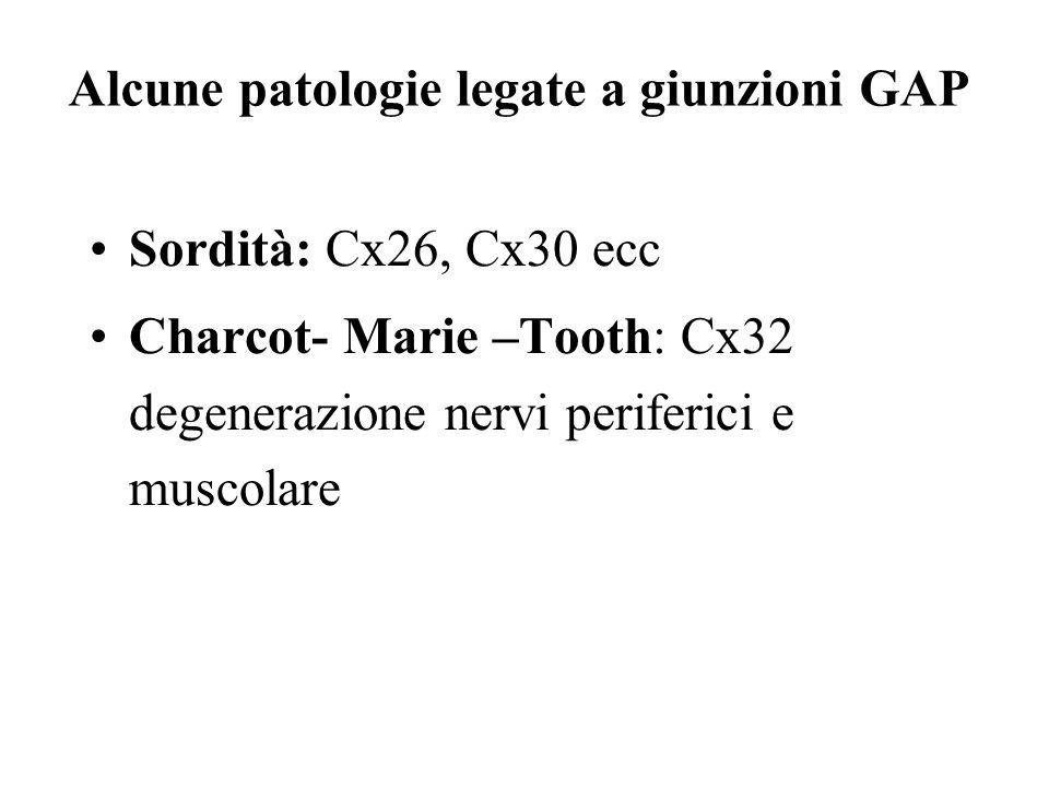 Alcune patologie legate a giunzioni GAP
