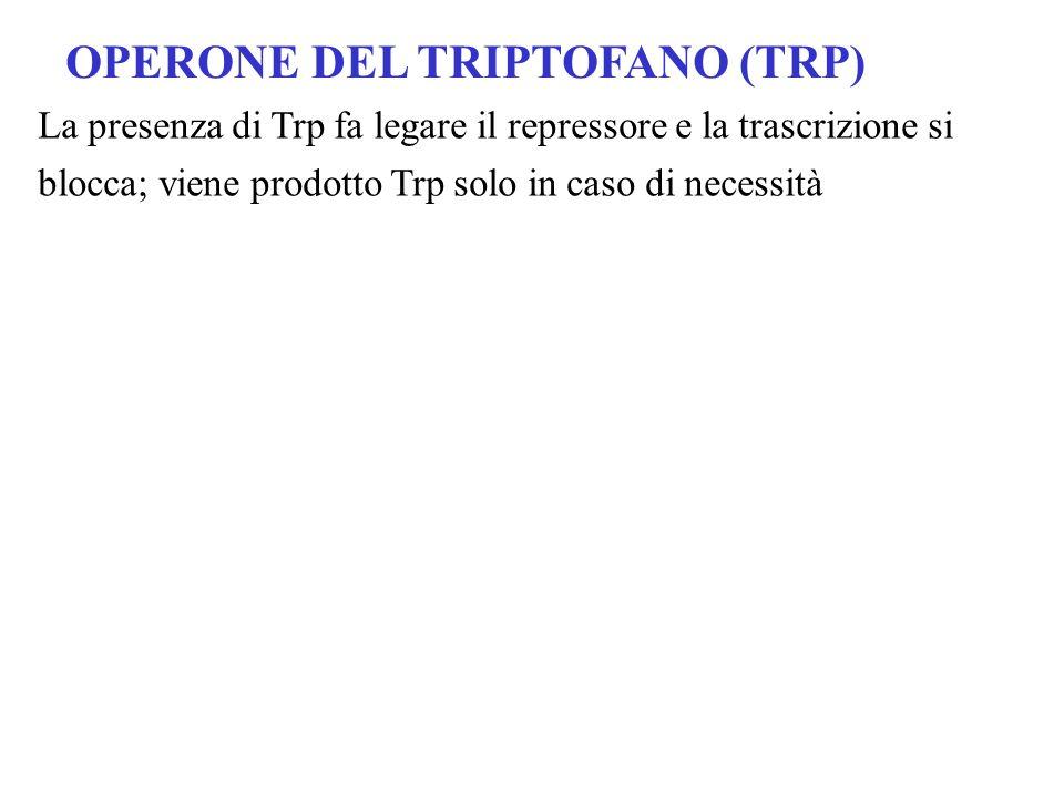 OPERONE DEL TRIPTOFANO (TRP)