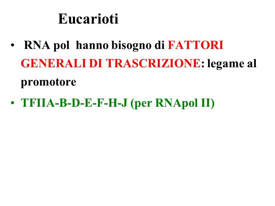 Eucarioti RNA pol hanno bisogno di FATTORI GENERALI DI TRASCRIZIONE: legame al promotore.