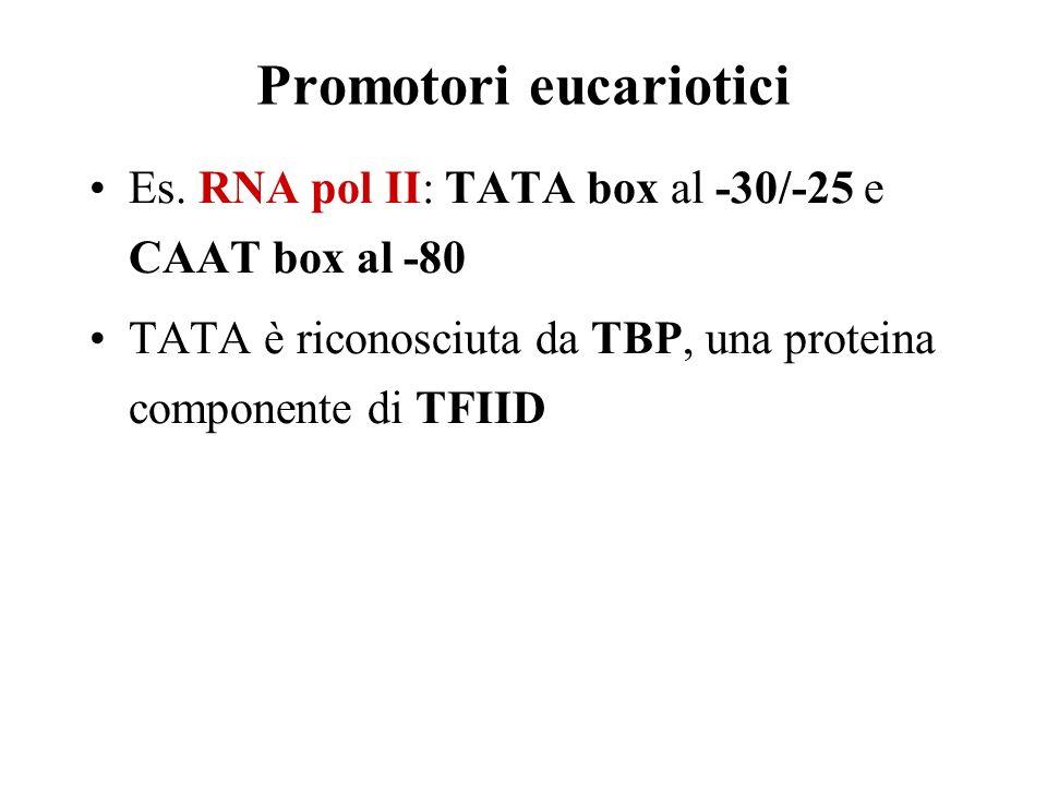 Promotori eucariotici
